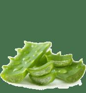 ALHYDRAN ingredient Aloe Vera